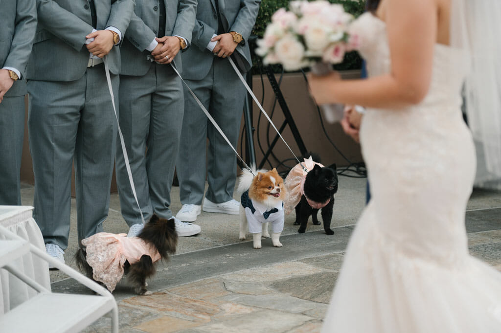 dogs at a wedding ceremony at NOOR